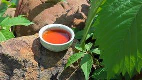 Enredadera de Virginia del fondo de la piedra de la taza de té negro nadie cantidad del hd metrajes