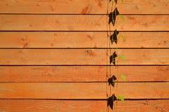 Enredadera en el fondo de madera Fotografía de archivo libre de regalías