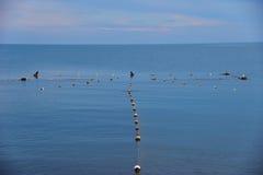 Enrede en costa y los pájaros - cormorán y gaviota fotografía de archivo libre de regalías