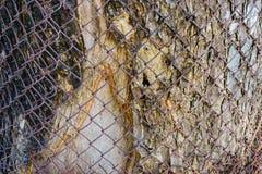 Enrede la cerca en el fondo del árbol de madera foto de archivo libre de regalías