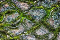 Enrede la vegetación, en tundra poligonal del substrato de la malla de la fino-estructura foto de archivo