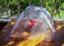 Enrede para proteger la comida contra insectos foto de archivo libre de regalías