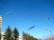 Enregistrement de cerf-volant de Glenelg Photos libres de droits