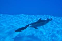 Enregistrement de Mondial dans Freediving - Simone Arrigoni Photographie stock