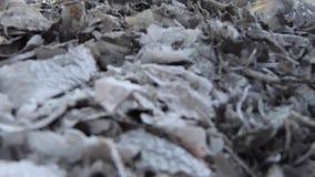 Enregistrement vidéo, déchets brûlants et fumée Le vent violent se lève fumée toxique des déchets brûlants dans l'air et écarte clips vidéos