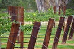 Enrejado del viñedo Imagen de archivo libre de regalías