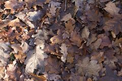 Free Enriching Soil With Dead Leaves Of Oak Tree In Woods Royalty Free Stock Images - 206083089