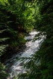 Enrolamento da cachoeira através da floresta Imagens de Stock