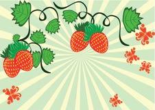 Enrollamiento de bayas y de mariposas de la fresa Libre Illustration