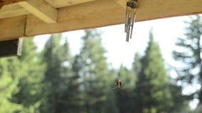 Enrolle el colector con los abetos en fondo en una cabina metrajes
