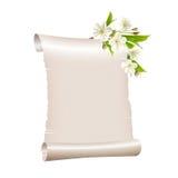Papel en blanco de la voluta con la rama floreciente de la cereza Foto de archivo libre de regalías