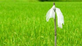 Enrolle la bolsa de plástico que sopla lenta en polo de bambú seco a perseguir pájaros en el campo del arroz Espantapájaros Arroz almacen de metraje de vídeo