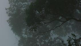 Enrolle la niebla blanca que sopla lenta en día de niebla en bosque tropical con los árboles verdes densos almacen de metraje de vídeo