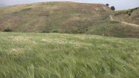 Enrolle la primavera fuerte en las colinas con la hierba alta almacen de video