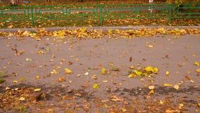Enrolle las hojas de otoño amarillas que soplan en la carretera de asfalto cerca de la cerca metrajes