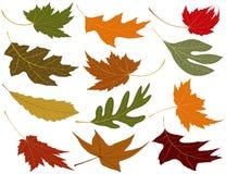 Enrolle las hojas sopladas de la caída Fotos de archivo