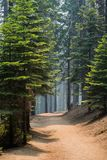 Enroulement de chemin par une forêt de pin photos stock