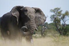 Enroulement de joncteur réseau d'éléphant images libres de droits