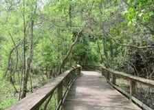 Enroulement de promenade par la terre de marais avec l'élevage d'arbres de Cypress Photos stock