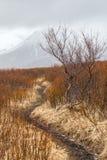 Enroulement de sentier de randonnée par des arbustes avec les crêtes de montagne couronnées de neige à l'arrière-plan image libre de droits
