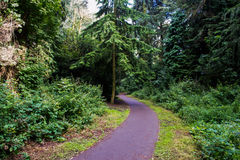 Enroulement Forest Path Photographie stock