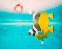 Enroulez l'eau du fond de poissons de jouet de rouages dans une piscine Photos libres de droits
