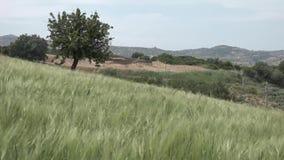 Enroulez le ressort fort dans les collines avec l'herbe grande banque de vidéos