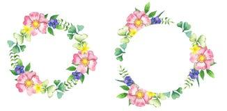 Enrruelle con la perro-rosa, las flores salvajes y las vidas verdes Stock de ilustración