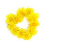 Enrruelle en forma del corazón de las flores del diente de león aisladas en blanco Imágenes de archivo libres de regalías