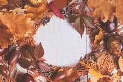Enrruelle la ilustración del marco de ramas secas de un thuja Imagenes de archivo