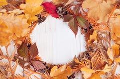 Enrruelle la ilustración del marco de ramas secas de un thuja Fotografía de archivo libre de regalías