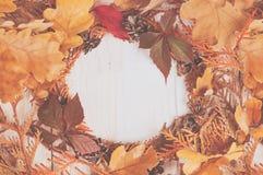 Enrruelle la ilustración del marco de ramas secas de un thuja Fotografía de archivo