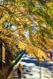 Enryaku-ji ist ein Tendai-Kloster, das auf Berg Hiei in Otsu gelegen ist, Lizenzfreie Stockbilder