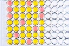ensaio Enzima-ligado da imunoabsorção ou placa de ELISA foto de stock