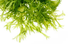 Ensalada comestible de la alga marina Fotos de archivo