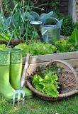 Ensalada de la cesta en jardín Foto de archivo libre de regalías