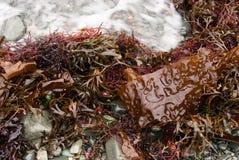 Ensalada de la playa Foto de archivo libre de regalías