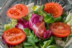 Ensalada de verdes y de tomates con aceite de oliva Fotografía de archivo libre de regalías