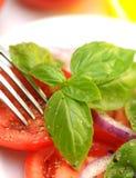 Ensalada del tomate Imágenes de archivo libres de regalías