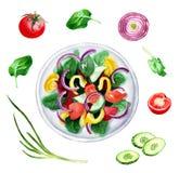 Ensalada e ingridients, ejemplo de las verduras frescas de la acuarela Foto de archivo libre de regalías