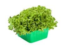 Ensalada fresca de la lechuga en rectángulo verde fotografía de archivo libre de regalías