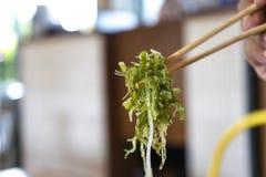 Ensalada japonesa de la alga marina en los palillos preparados fotos de archivo