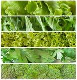 Ensalada verde Fotos de archivo