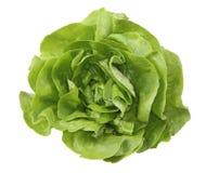 Ensalada verde Foto de archivo libre de regalías