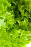 Ensalada verde imágenes de archivo libres de regalías