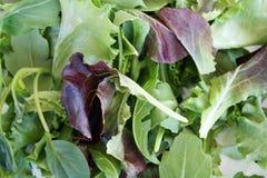 Ensalada verde Imagen de archivo