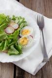 Ensalada verde con el rábano y el huevo duro en la placa blanca Imagen de archivo