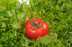 Ensalada verde con el tomate rojo Fotografía de archivo libre de regalías