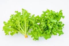 Ensalada verde de la verdura del roble Fotografía de archivo