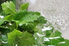 Ensalada verde en el agua Fotografía de archivo libre de regalías